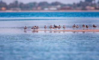 A,Group,Of,Birds,Stand,On,A,Sandy,Beach,In